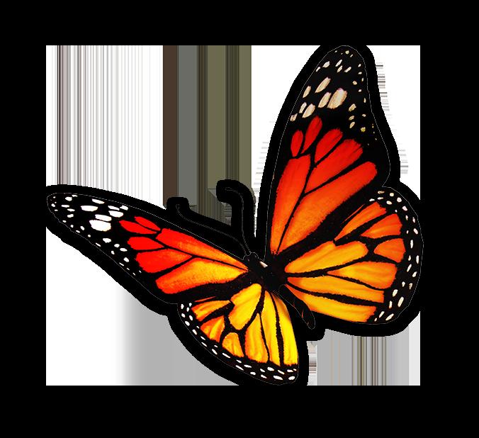 stichting-vlinders-schaduw